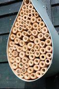 Bug Nest