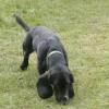 Poppy Dog