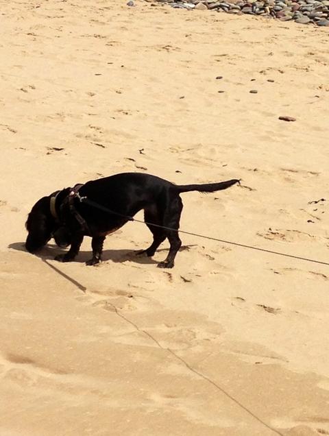 Smelling sand