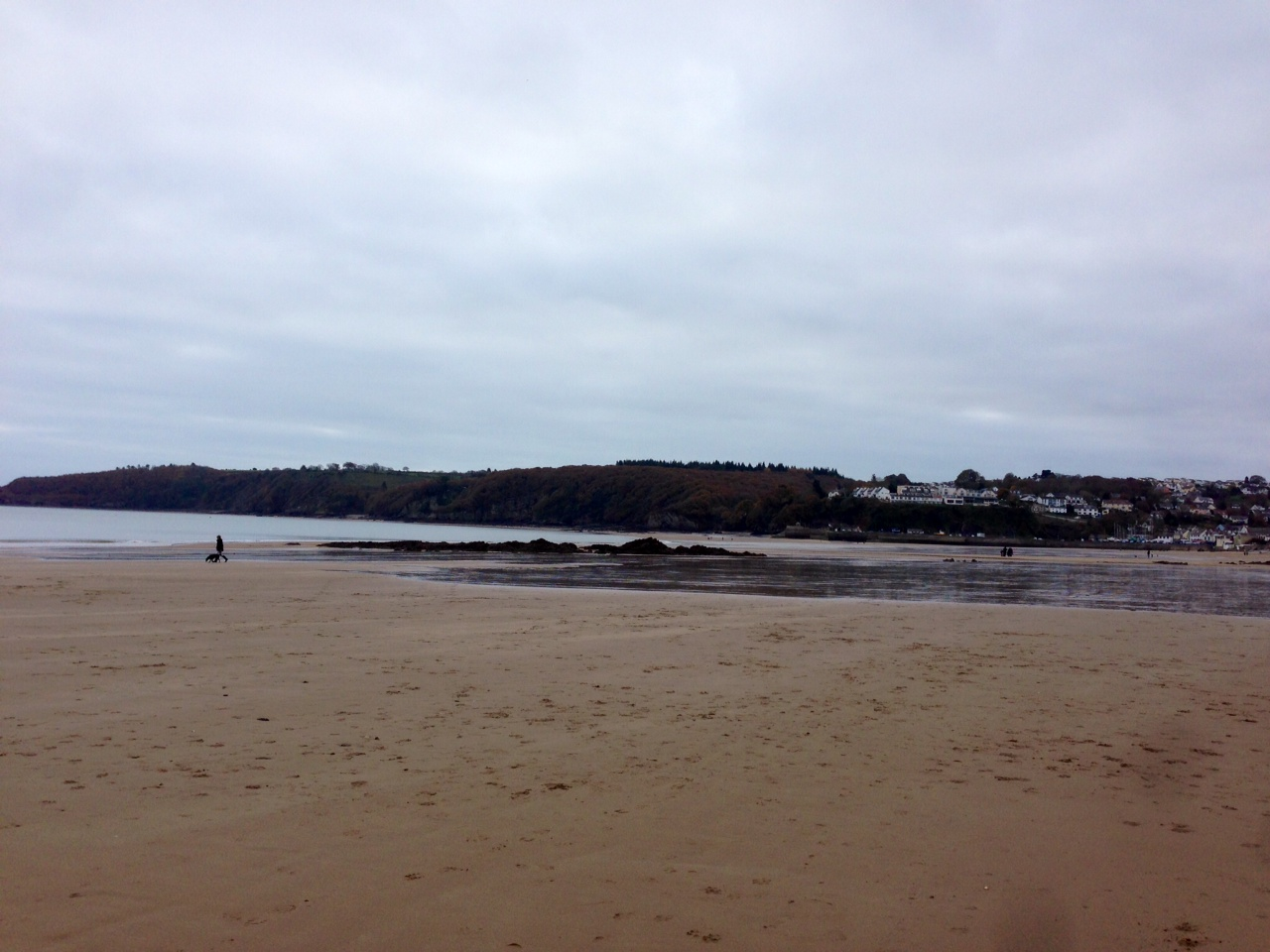 Dog walking Pembrokeshire
