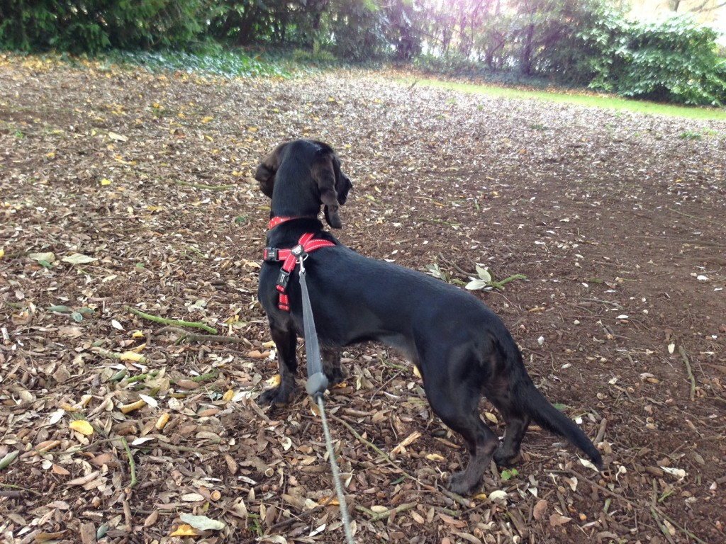 Poppy on squirrel patrol
