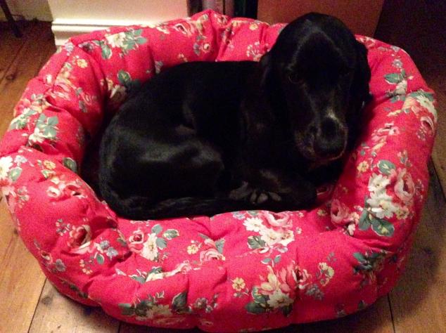Poppy the sleepy dog