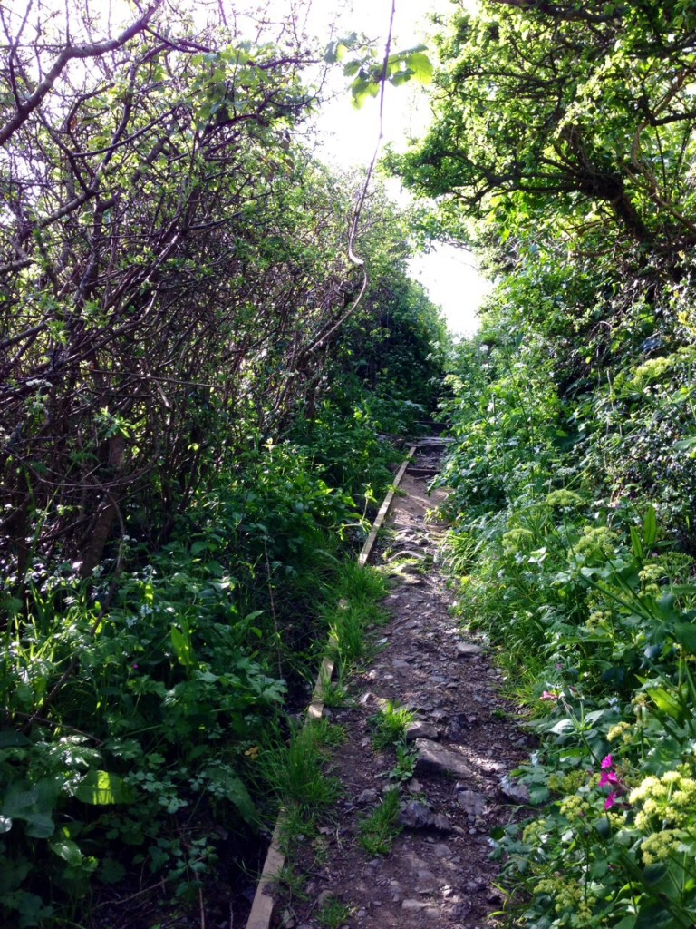 Cadgwith Footpath