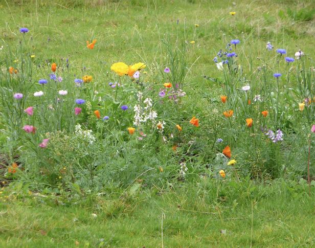 Hogacre Flowers
