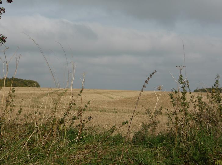 Oxfordshire Dog walks