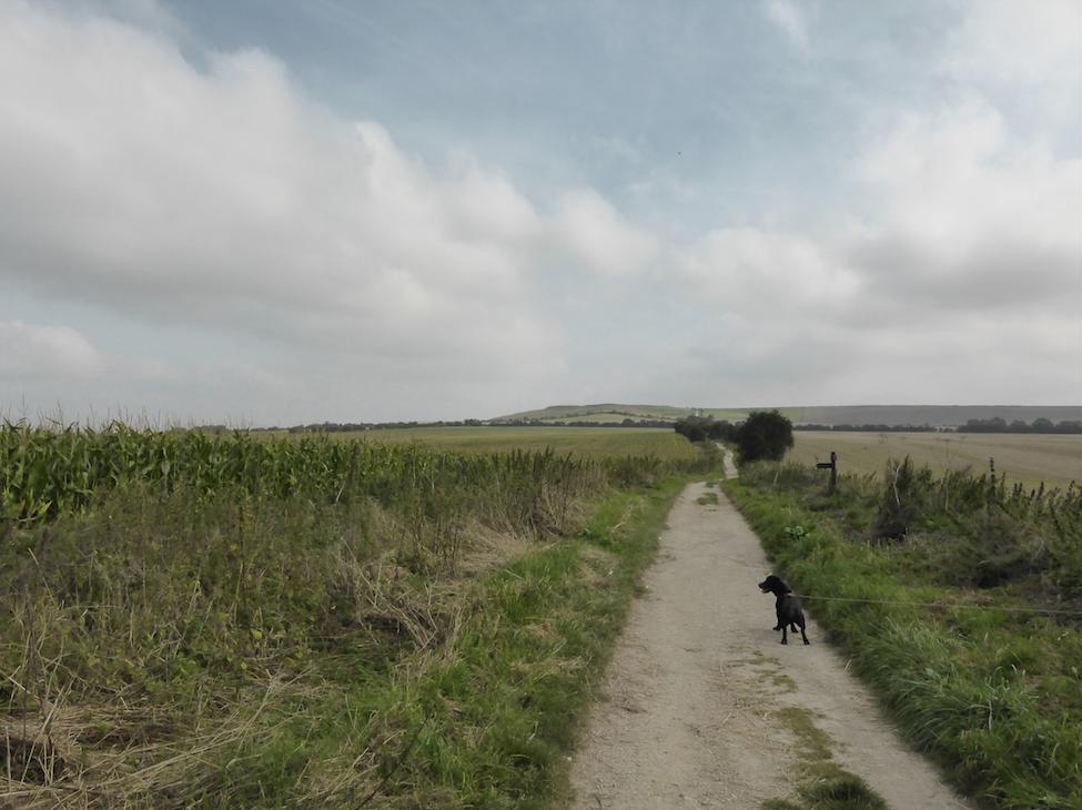 Wayland Walk
