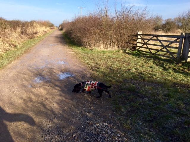 Dog walks at Otmoor Reserve