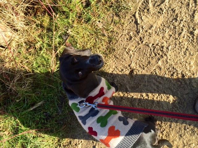 Poppydog at Otmoor