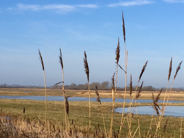 Walks at Otmoor Reserve