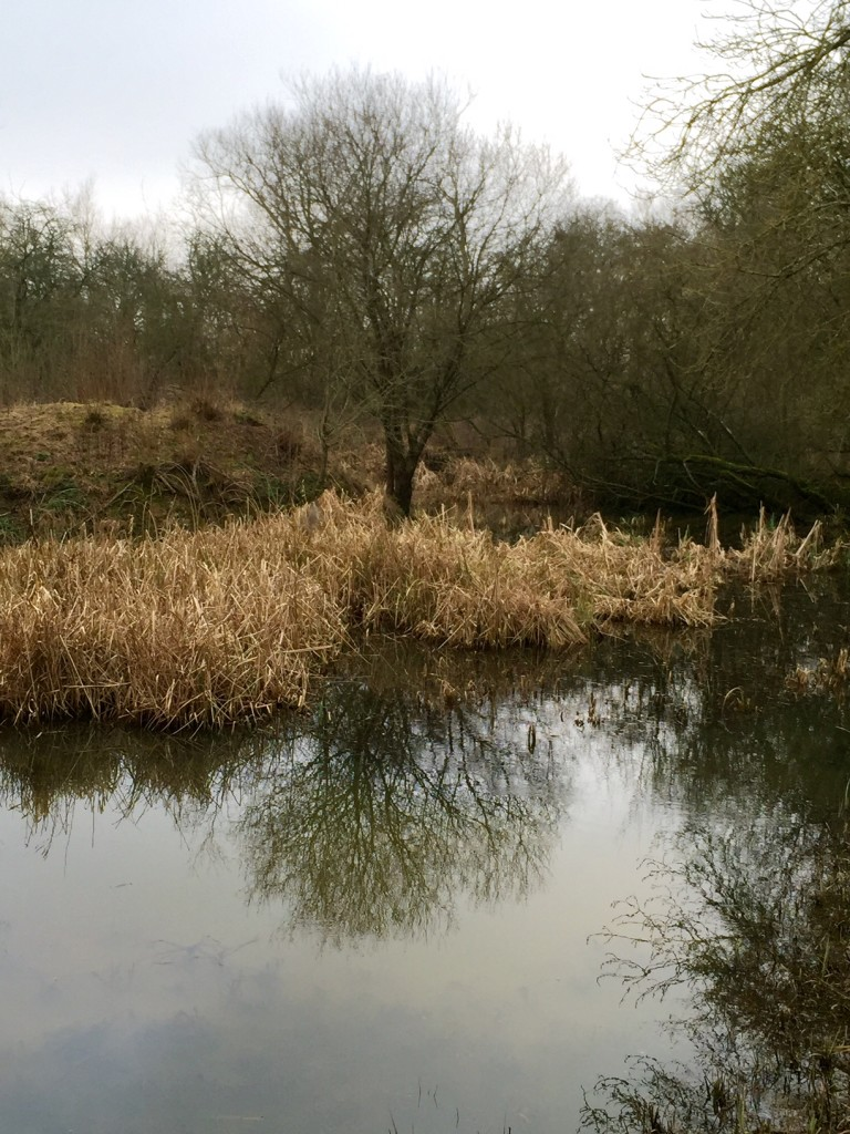 Chimney Meadows Tree Reflection