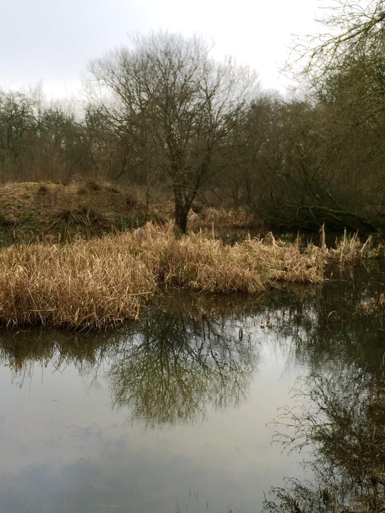 Chimney Meadows Tree Reflection