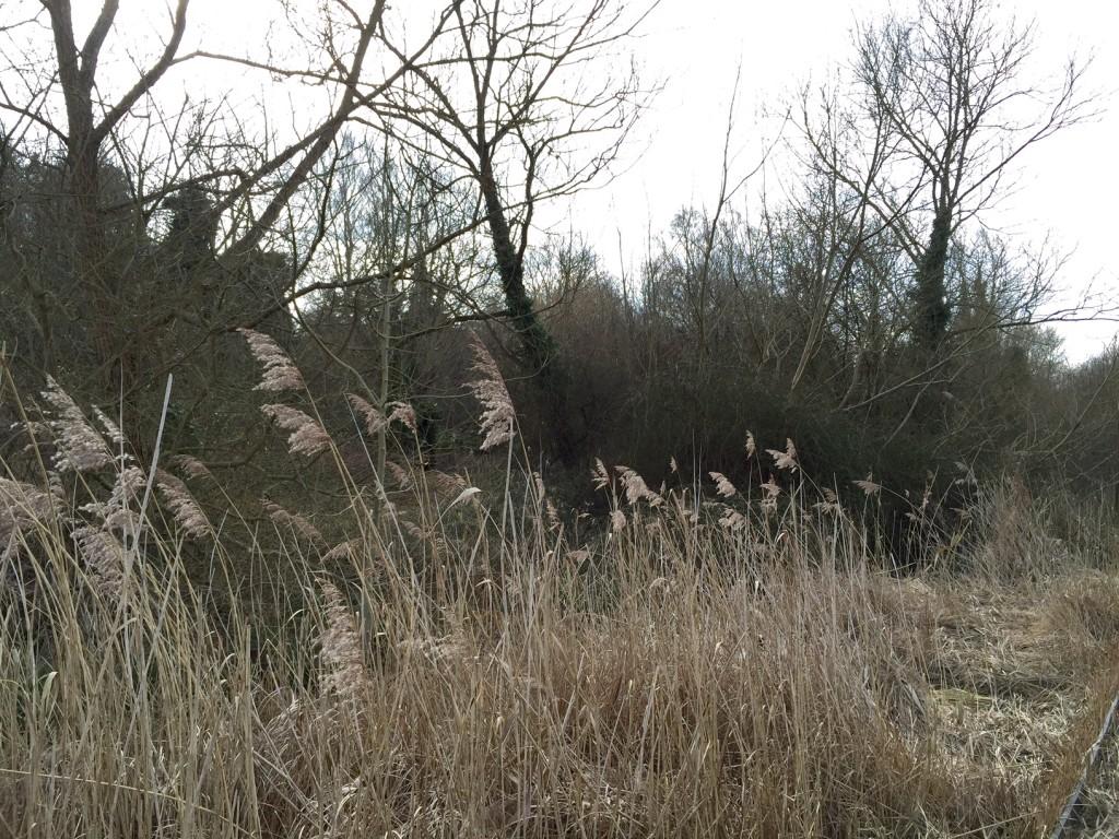 Lye Valley Walk