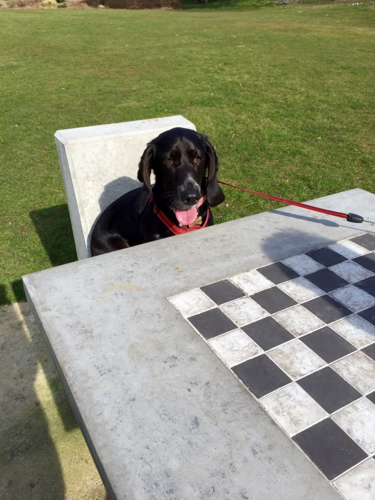 Poppy plays chess