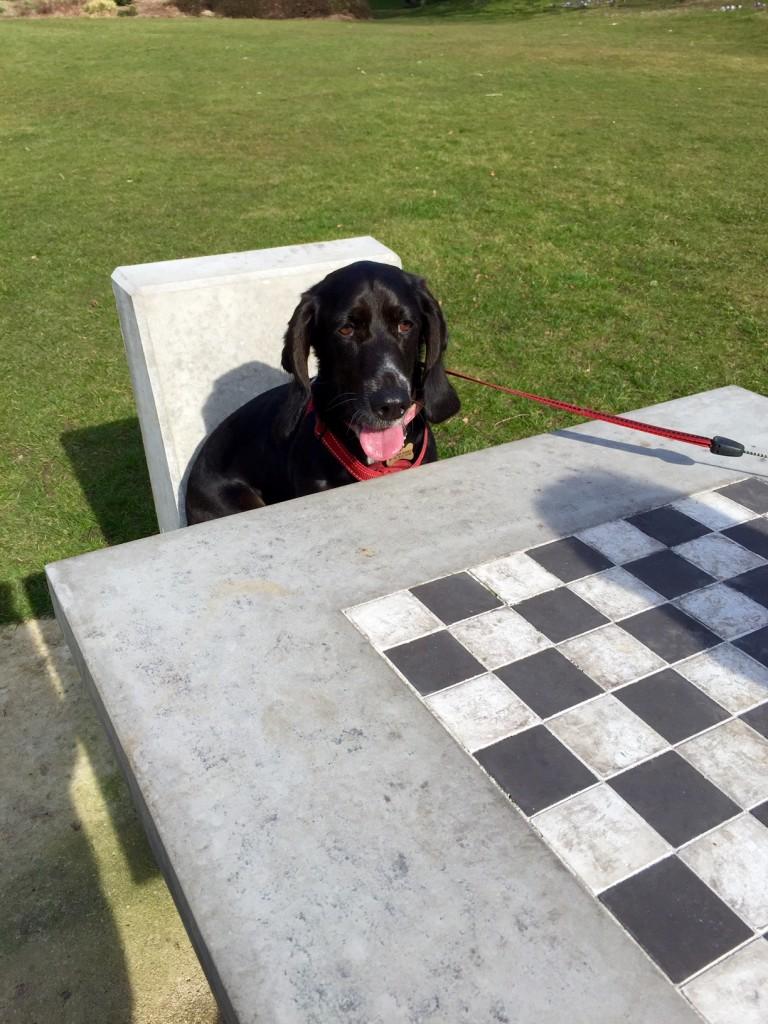 Poppy plays chess
