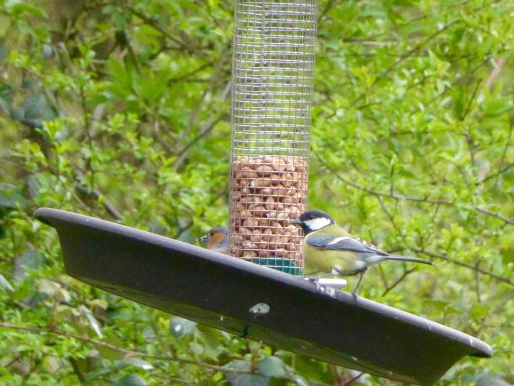 Warburg Birds