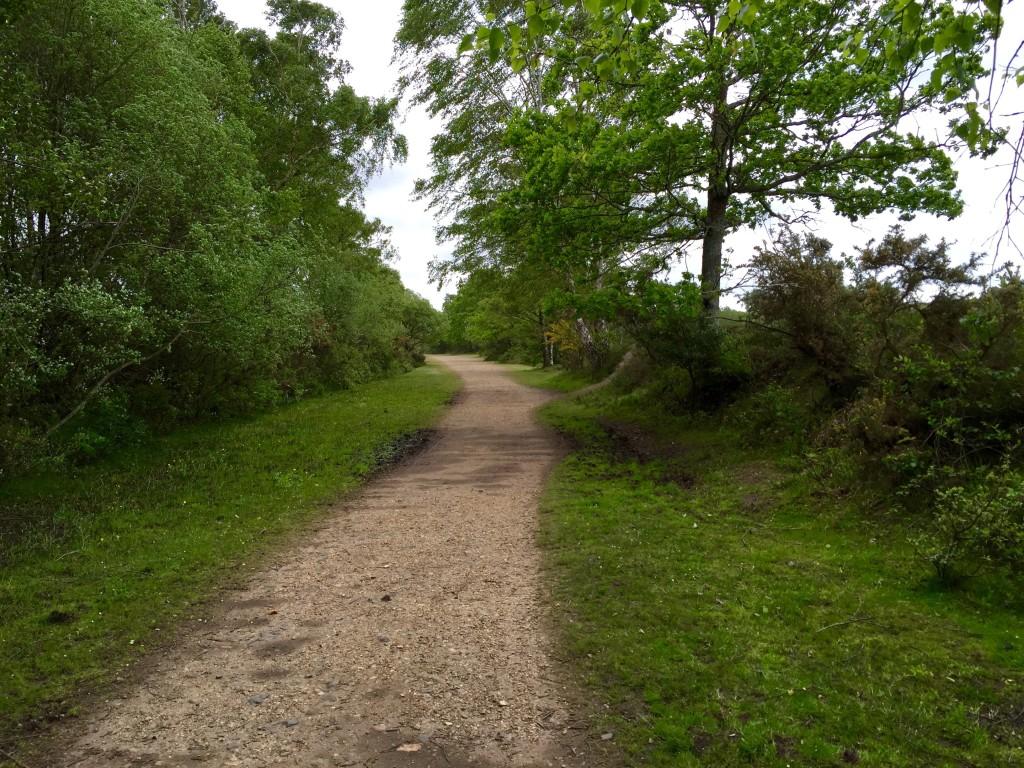 Holmsley circular walk