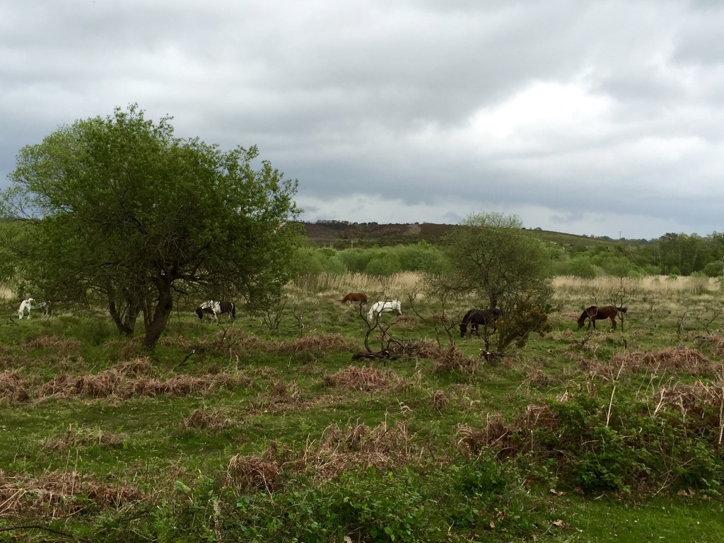 New Forest circular walk