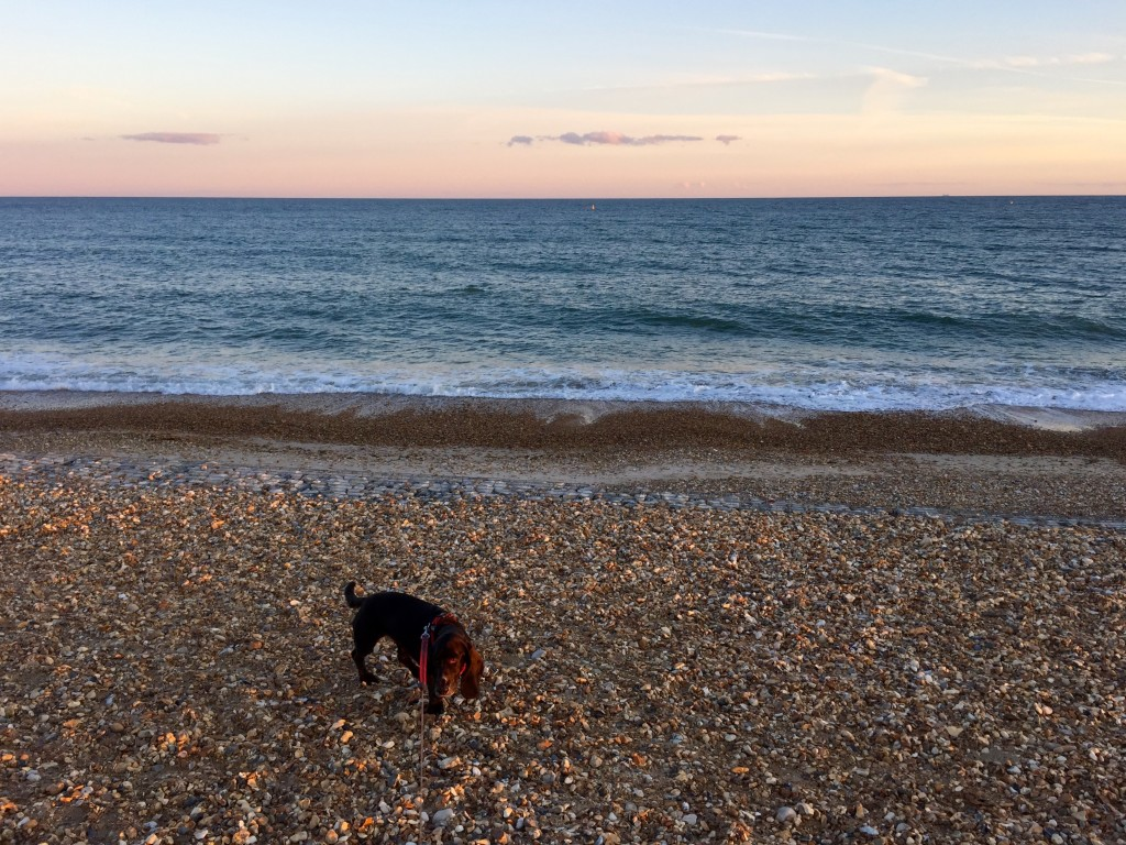 Poppy at Hengistbury Head