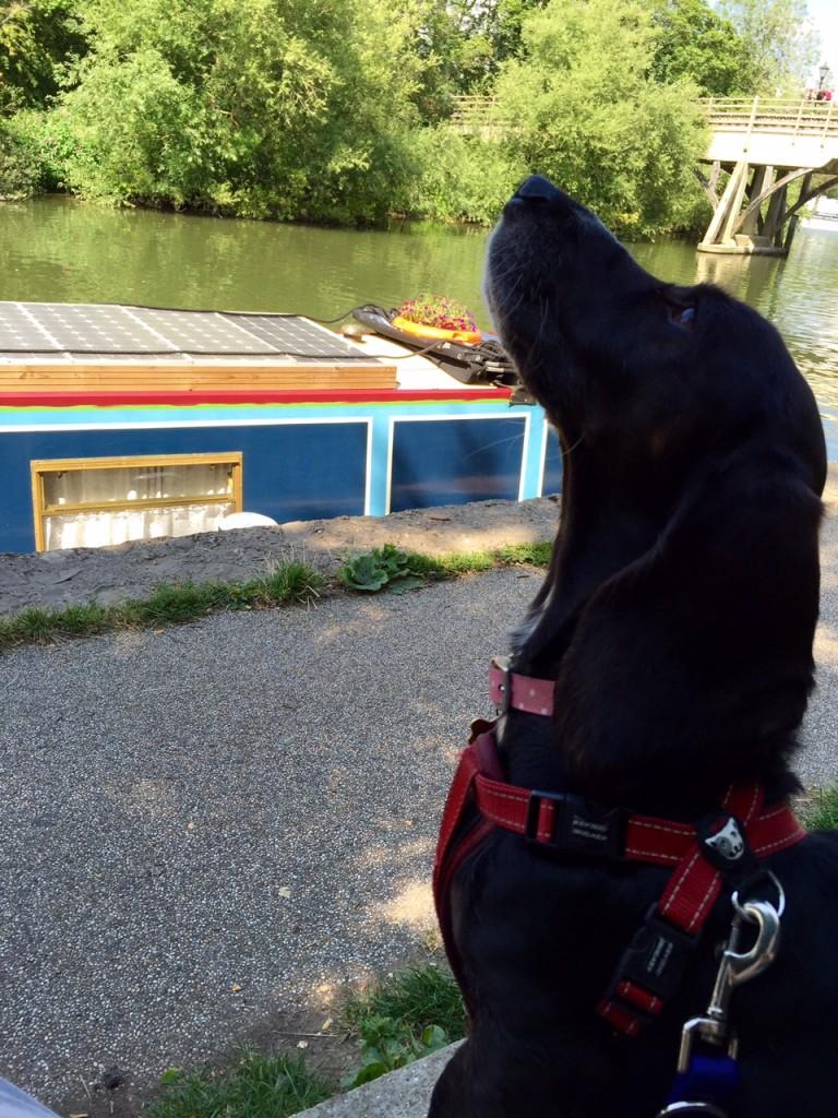 Poppydog at Goring