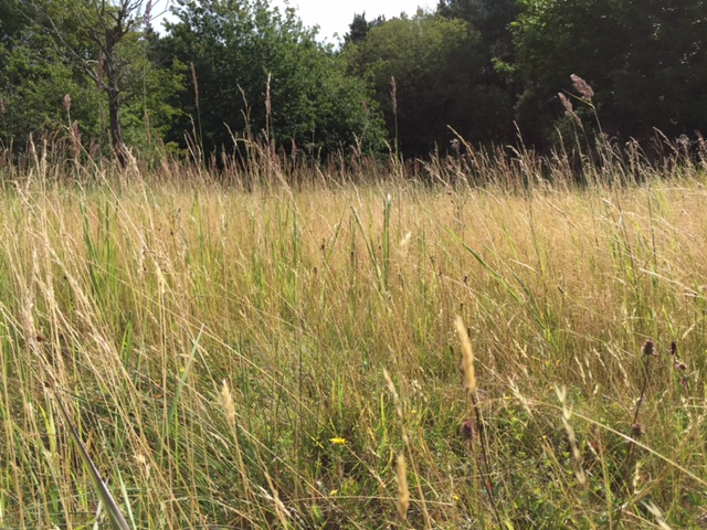 Whitecross Green BBOWT reserve