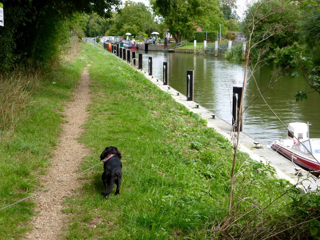 Poppydog at Clifton lock
