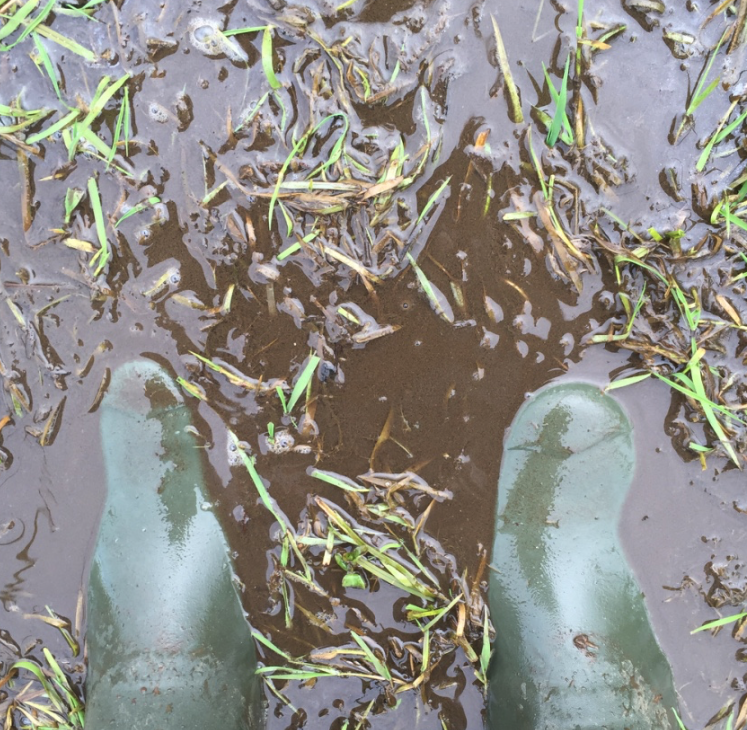 Muddy Iffley Meadows