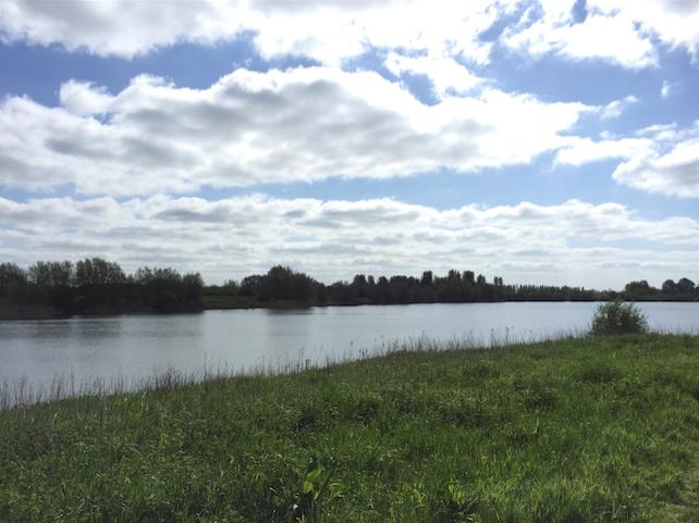 Tar Lakes Witney