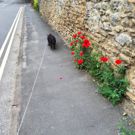 Poppy with poppies
