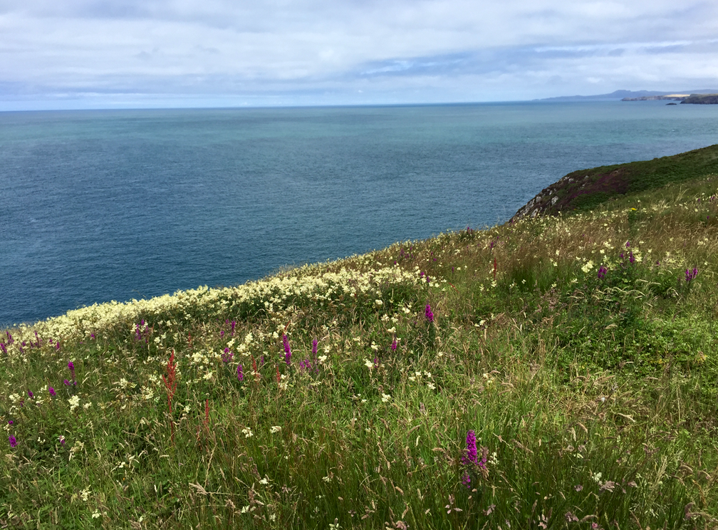 Sunny Pembrokeshire