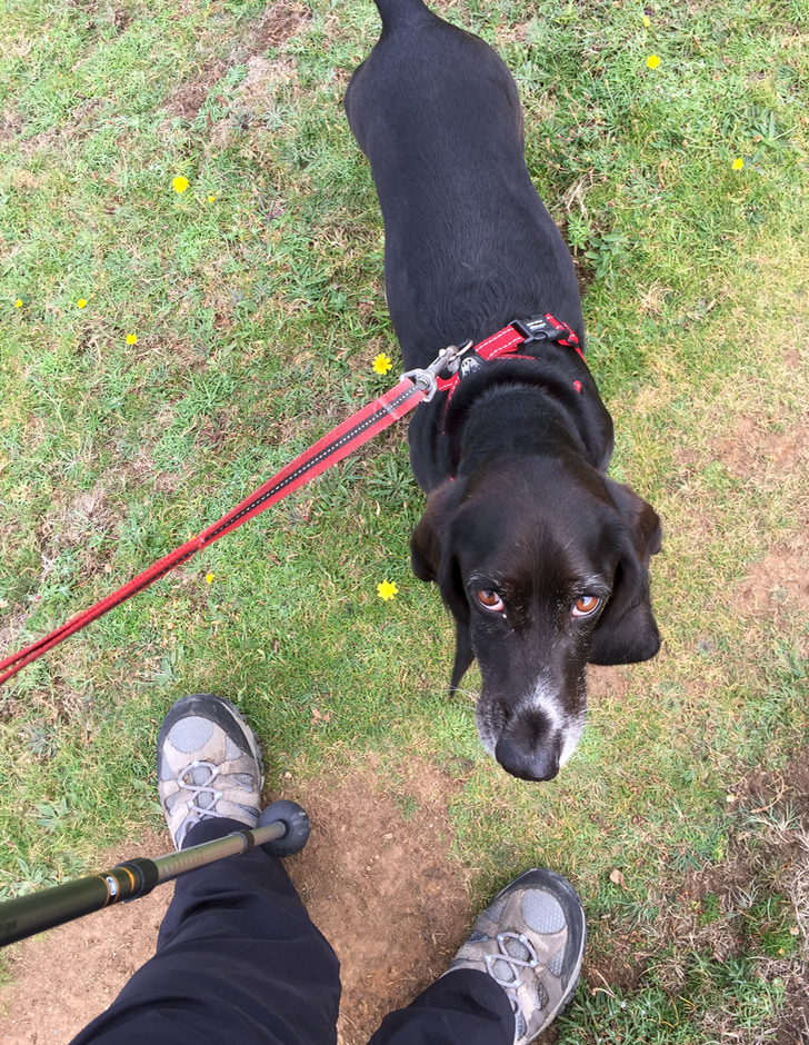 Walking with Poppydog