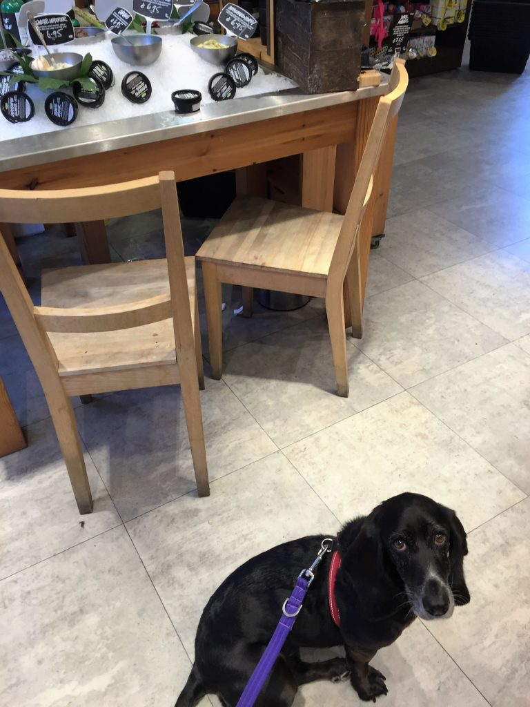 Poppydog in Lush