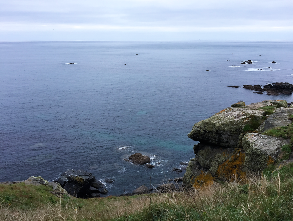 lizard coast walk