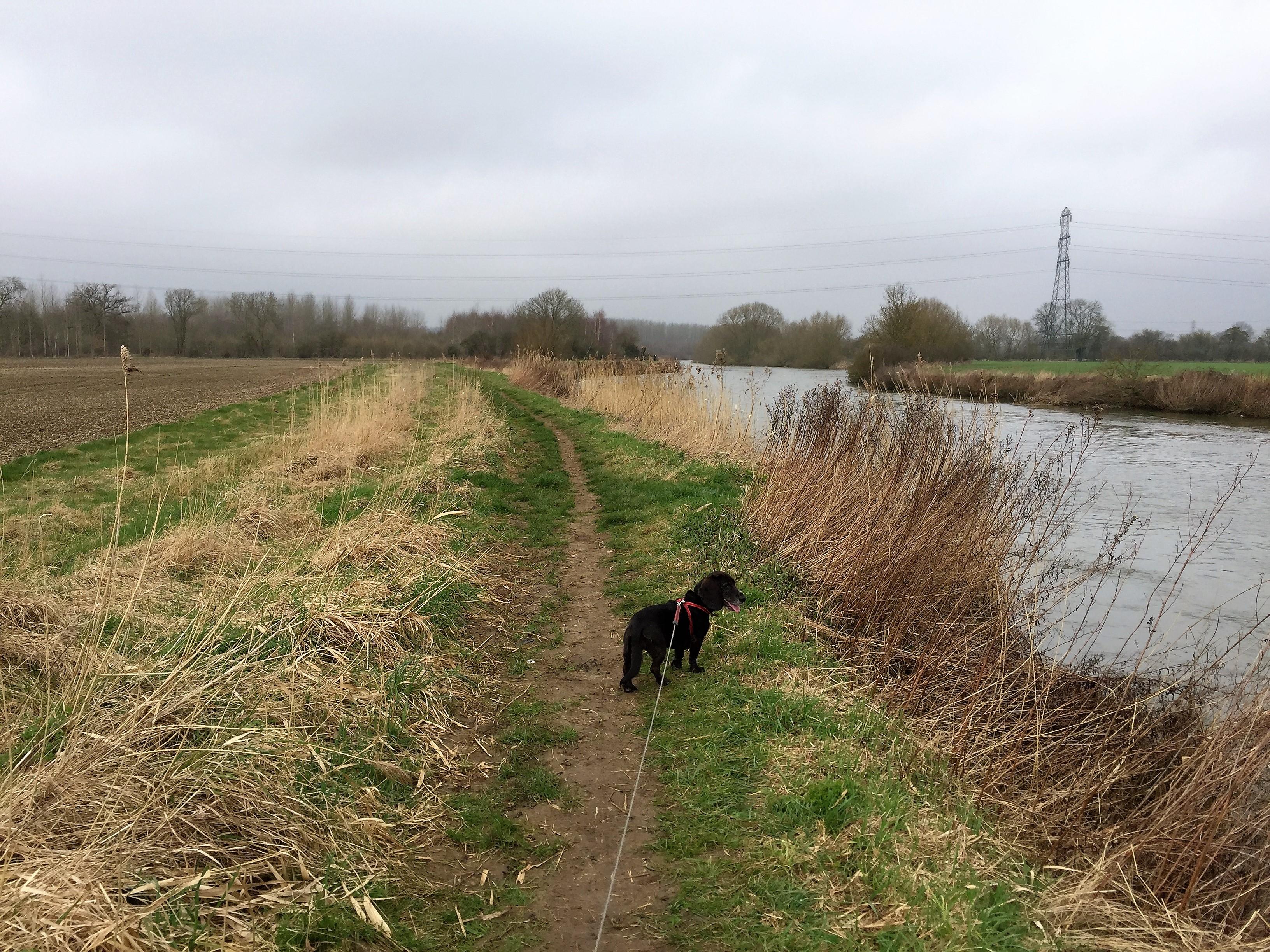 Poppydog on the Thames walk