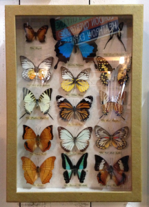 HomeBarn Butterflies
