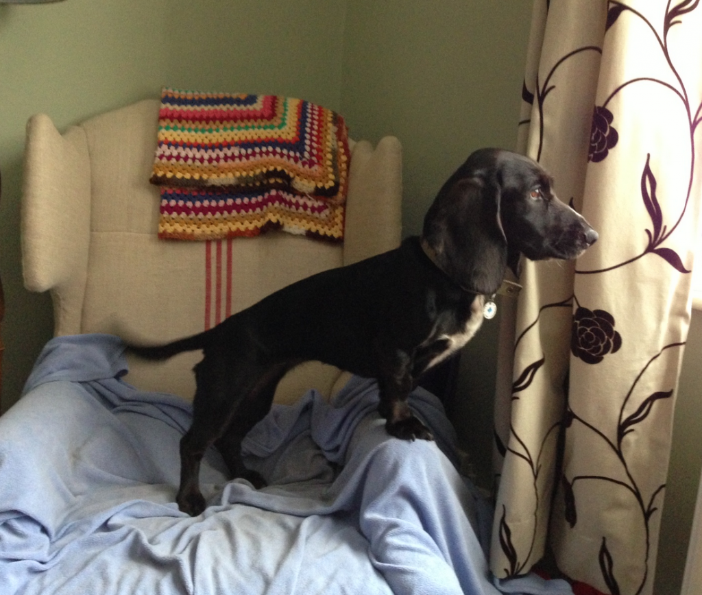 Poppy on Lookout