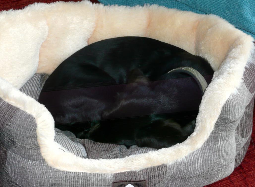 Poppy sleeping