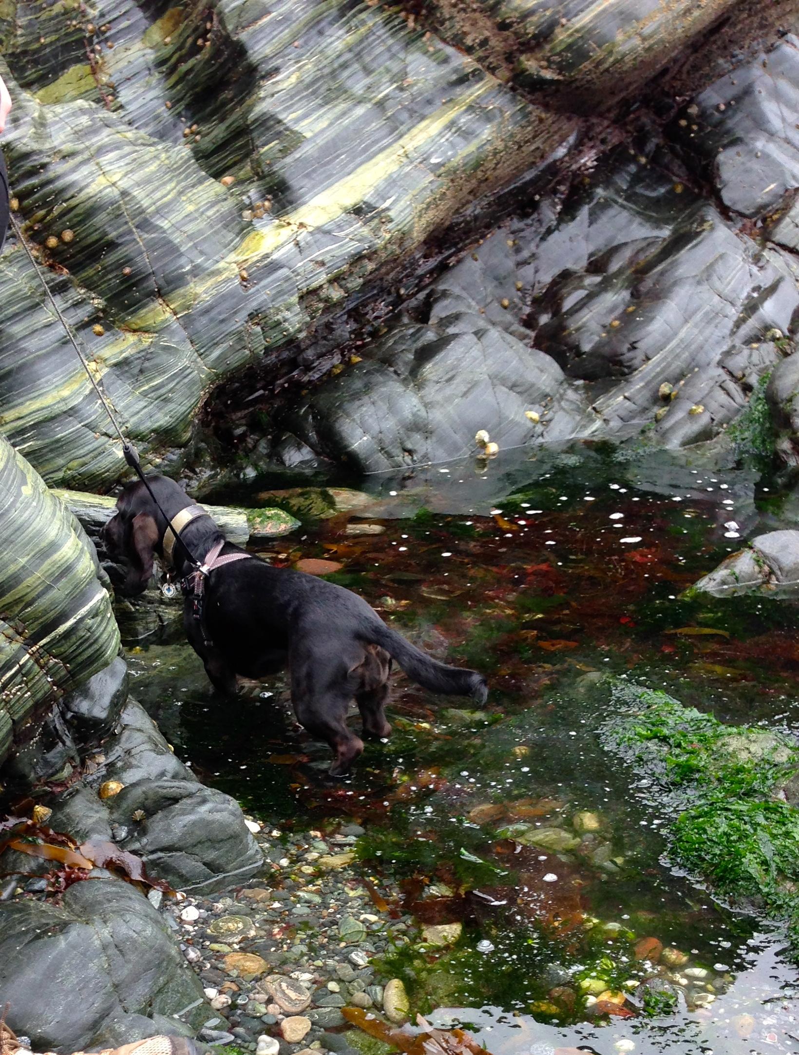 Rock pool dog