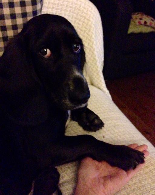Poppydog press paws