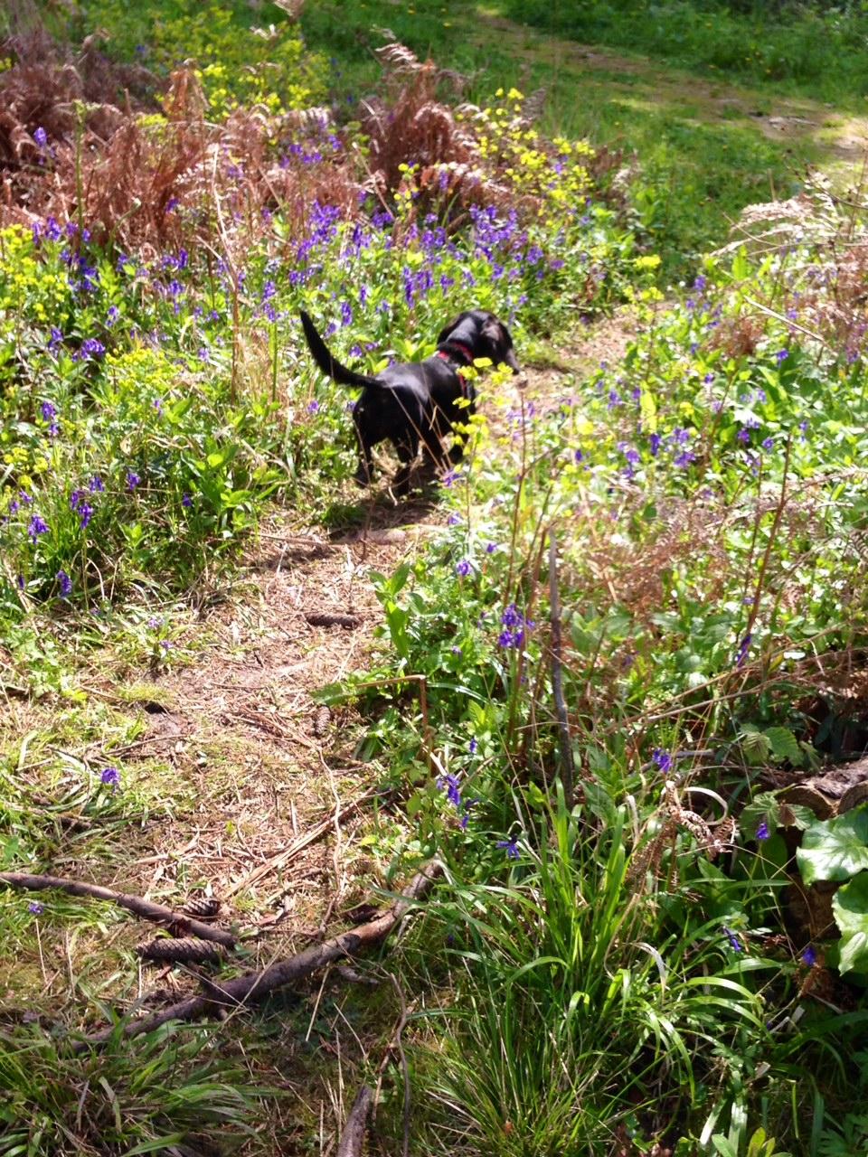 Poppy on the run