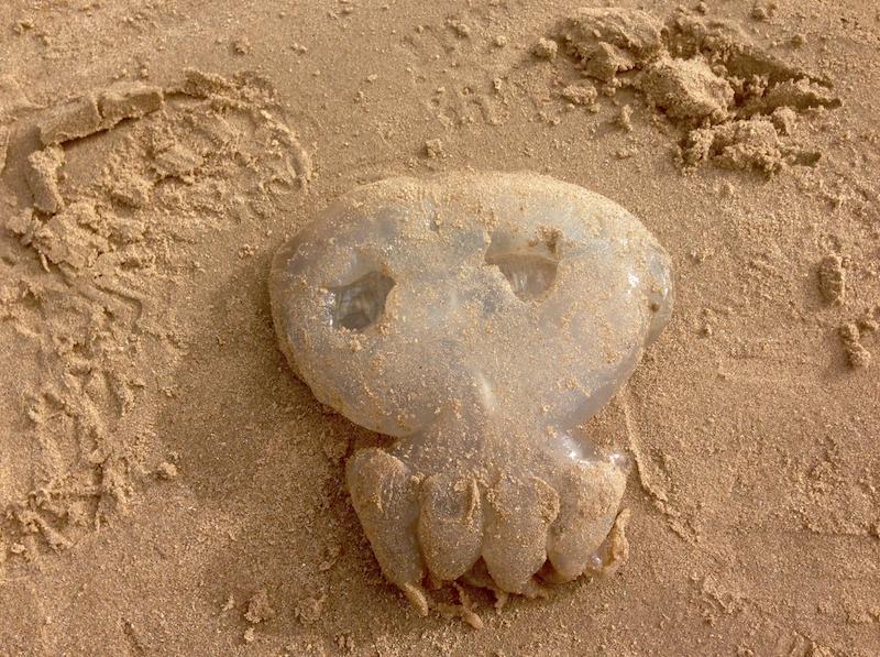 Spooky jelly fish