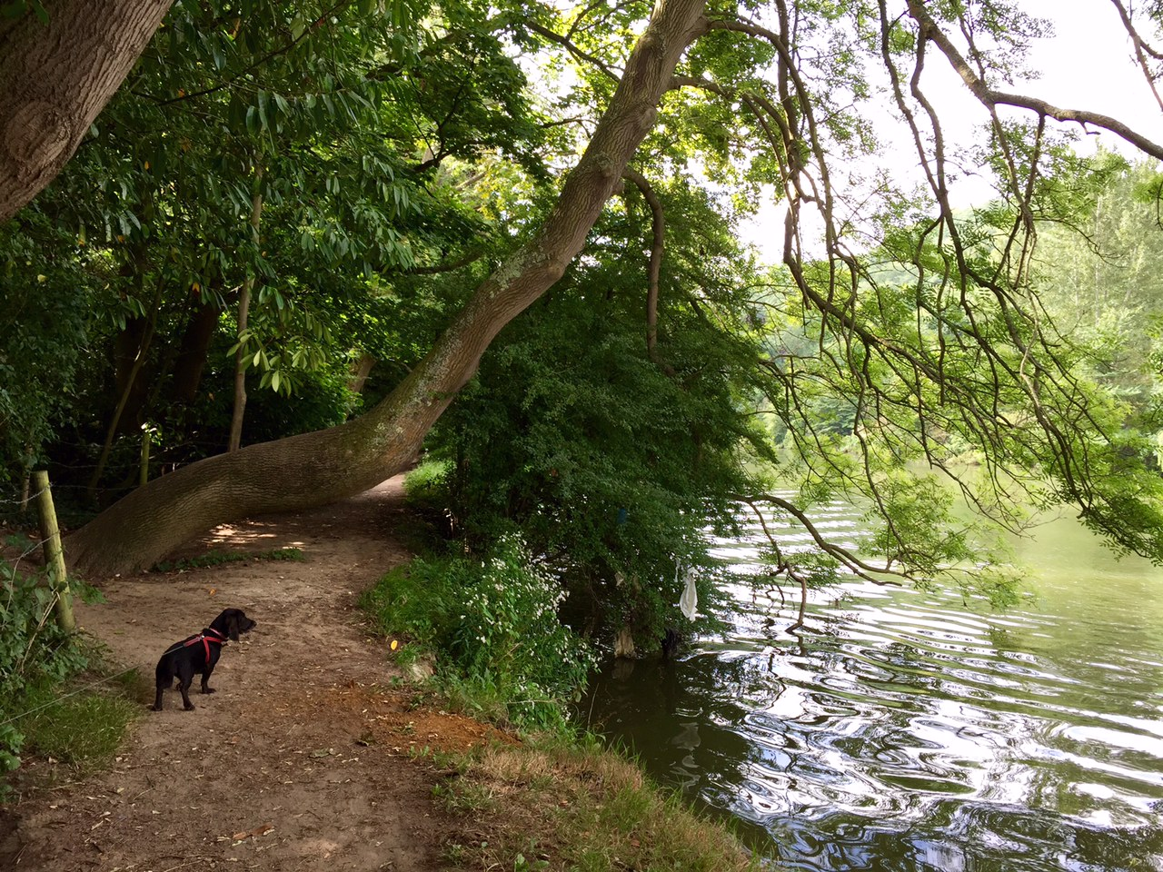 The Thames Path at Goring