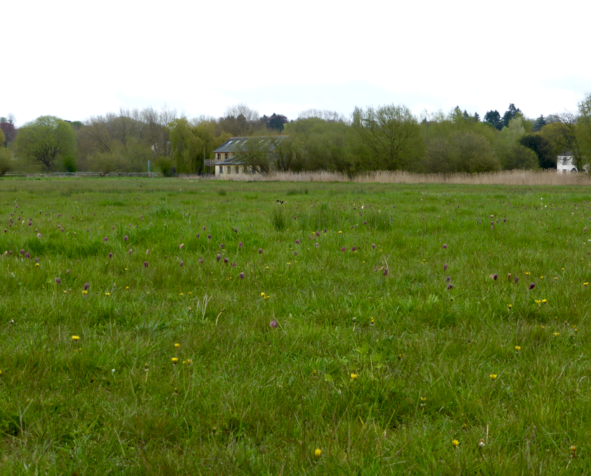 BBOWT Iffley Meadows