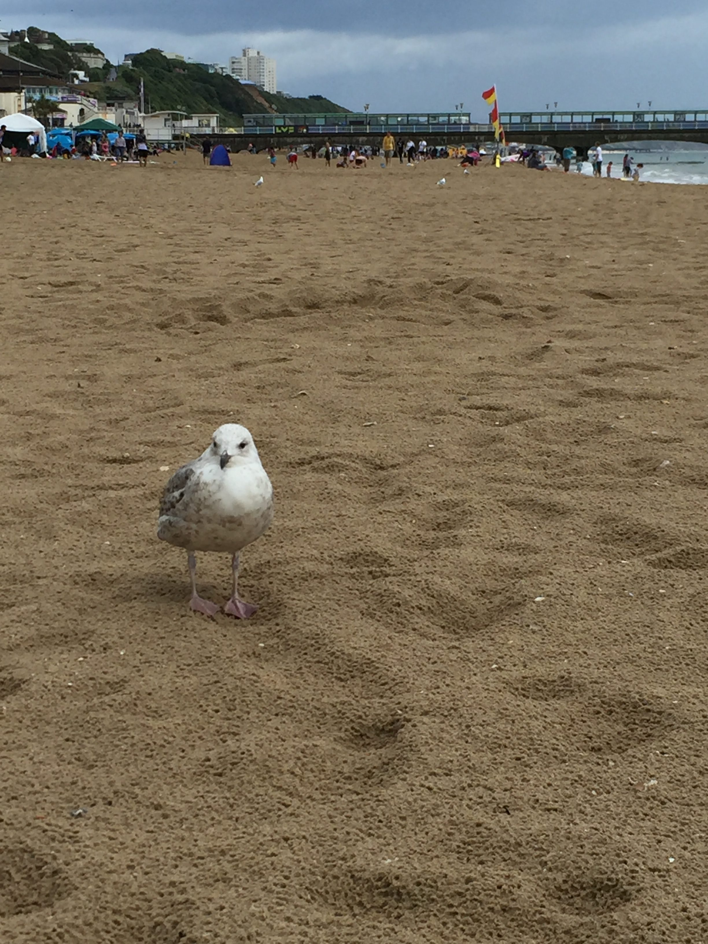 Baby seagull on Bournemouth Beach