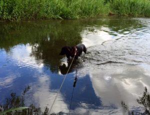 Poppydog swimming