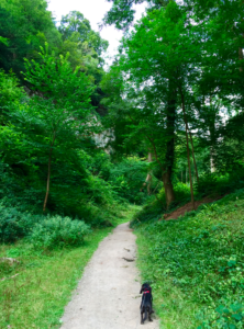 National Trust Leigh Wood Bristol