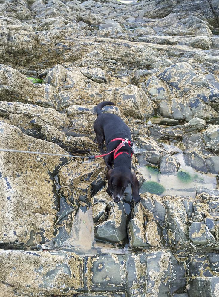 Poppydog climbing on rocks