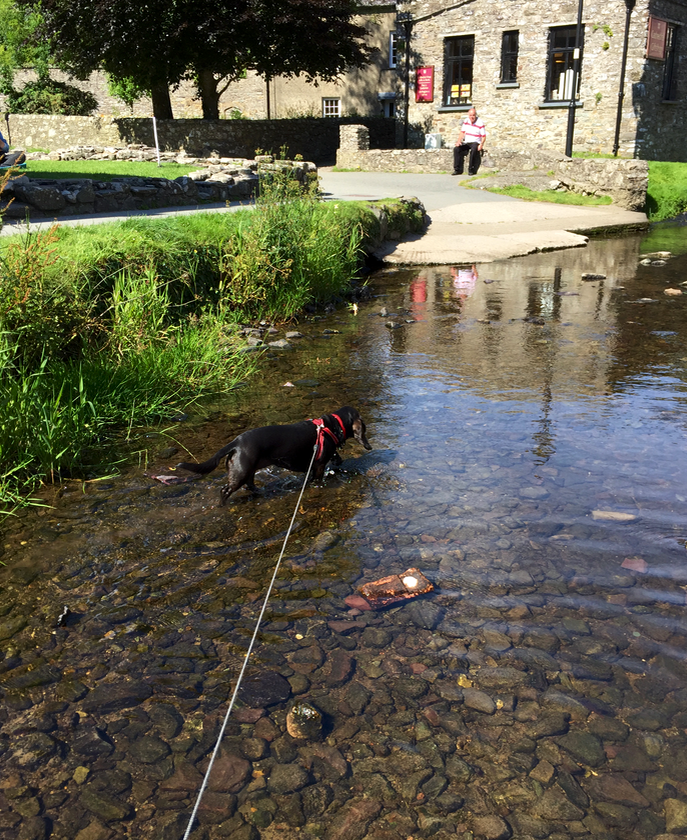 Poppydog paddling in the ford