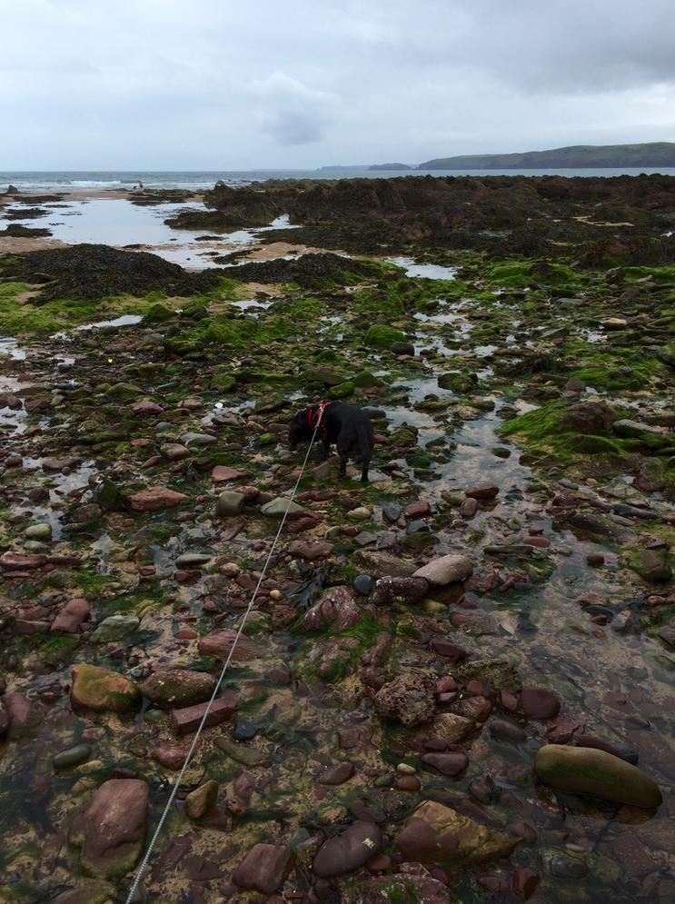 Poppydog rock climbing